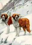 Alpine St. Bernards 1920 Digitally Remastered