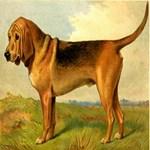 Bloodhound 1880 Digitally Remastered
