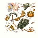 Passion Fruit Marina 1762 Remastered