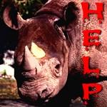 Help Rhino