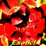 Exotic!