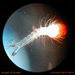 The Angel of Death Larva