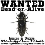 Mississippi Insect Guide (MIG) Wanted Poster