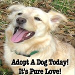 Adopt A Dog Today! It's Pure Love!