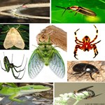 Photo Collage Insects & Small Animals (Set 1 of 4)
