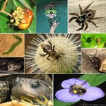 Photo Collage Insects & Small Animals (Set 3 of 4)