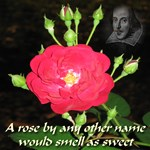 Wild Rose and The Bard