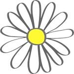 White Daisy - White Flower