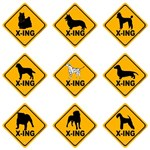 Canine Crossing