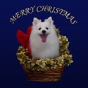 American Eskimo Christmas Basket