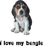 Beagle Lover