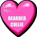 I Love My Bearded Collie