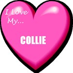 I Love My Collie