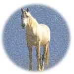 White Horse In Blizzard