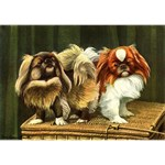 Pekingese Art T-Shirts