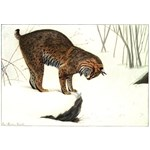 Bobcat Art