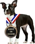 Best In Show Boston Terrier