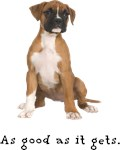 Good Boxer Puppy