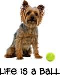 Silky Terrier Life