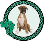 Irish Boxer Dog