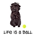 Affenpinscher Life