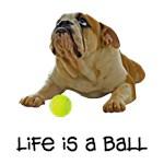 Bulldog Life