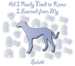 Learned From My Saluki
