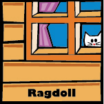 Ragdoll