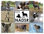 Old NADSR Calendar Items