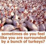 Bunch of Turkeys