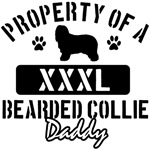 Bearded Collie Daddy