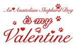 An Anatolian Shepherd my valentines