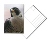 <h3><b>Post Cards</b></h3>