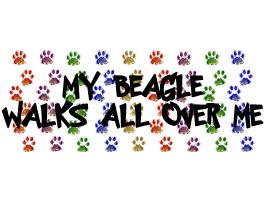 MY BEAGLE WALKS ALL OVER ME
