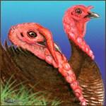 Bourbon Red Turkeys2