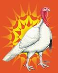 Sunburst White Turkey
