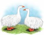 Sebastopol Goose Pair