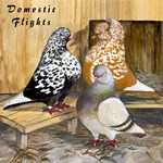 Domestic Flights Three