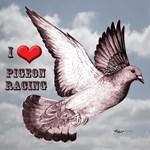 Love Pigeon Racing