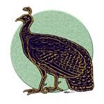 Congo Peafowl