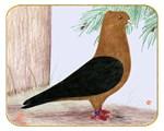 Gold Blackwing Archangel