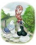 Assorted Trio Pigeons
