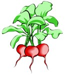 Veggie Art - Radishes Kitchen Decor and more