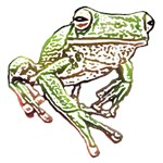 Painted Pond Frog T-Shirts & Gifts