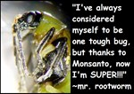 Super Bug!