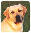 Yellow Labrador Retriever Photo Designs