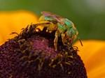 Bizzy WorkeR Bee