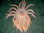 SunFish on Ocean Floor