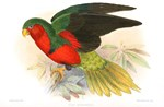 Brilliant Red and Green Parrot