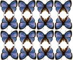 Parade of Butterflies